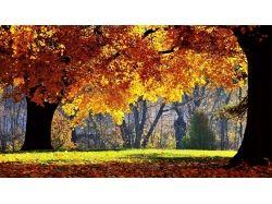Осень фоновые рисунки 6