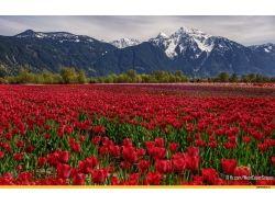 Красивые картинки природы горы