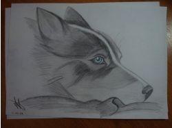 Рисунки карандашом для начинающих животные