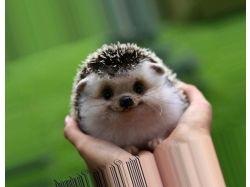 Самые красивые картинки животных