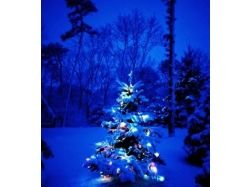 Новогодние елки картинки 9