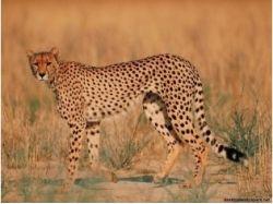 Картинки детенышей диких животных 9