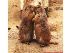 Фото влюбленных животных 9