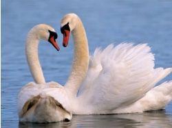 Фото влюбленных животных 5