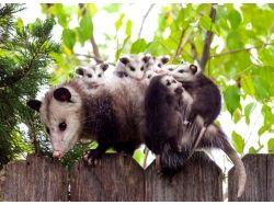 Фотки няшных животных 1