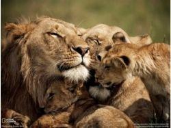 Красивые картинки семья дети 7