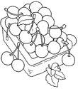 ямайская вишня - раскраски для детей 7