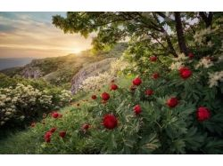 Болгария природа картинки 7