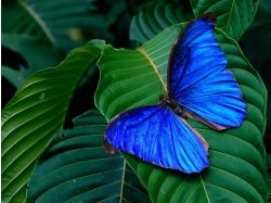 Бабочки насекомые картинки 7