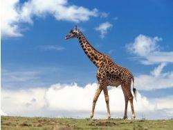 Животные природа картинки скачать на рабочий стол 7
