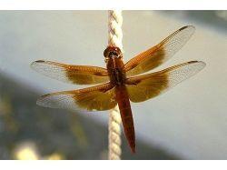 Обитатели пресного водоёма насекомые фото 7