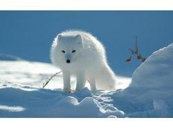 Животные природа картинки 7