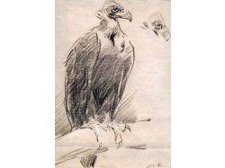 Медицина рисунки животных 7