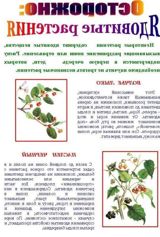 Ядовитые растения и название и описание для детей 64