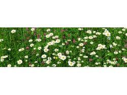Панорамные фото цветы 7