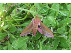 Книга насекомые фото 7