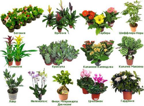Фото цветов на английском языке