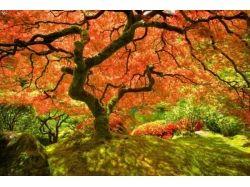 Осень лучшие фото 7