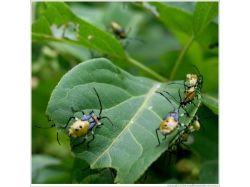 Комнатные насекомые фото 7
