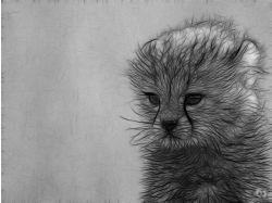 3d графика рисунки животных 3