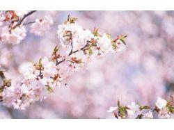 Картинки романтика весна 7