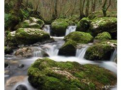 Вода и природа картинки 7