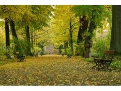 Природа фото осень 7
