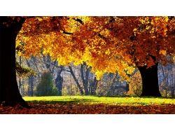 Осень фотографии природа 7