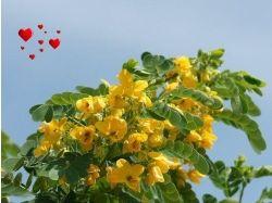 Открытки цветы музыкальные 7