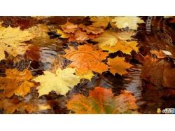 Осень картинки рабочий стол 7