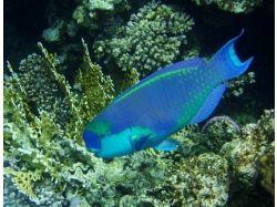 Подводный мир открытки фото 7