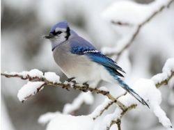 Фото зима и животные 7