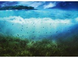 Подводный мир открытки в орле 7