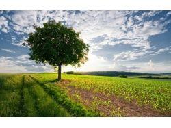 Деревья природа картинки 7