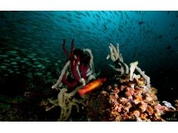 Подводный мир мальдив фото 7
