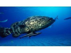 Широкоформатные обои подводный мир 7