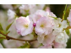 Цветы и природа картинки для рабочего стола 7