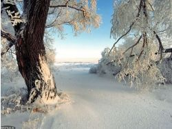 Картинки зима 2014 7