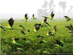 Широкоформатные фотографии попугаев 7
