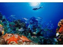Подводный мир персидского залива фото 7