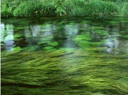 Зеленая природа картинки 7
