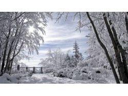 Красивые широкоформатные картинки с лесными растениями бесплатно 7