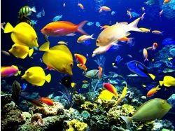 Видео подводный мир 7