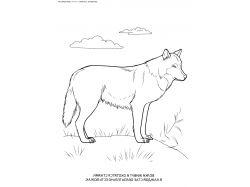Волк - раскраски для детей 7