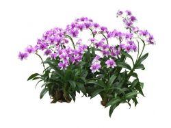 Скачать картинки цветы орхидея 7