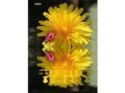 Картинки цветы для гостевых 7