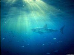 Обои подводный мир скачать бесплатно 7