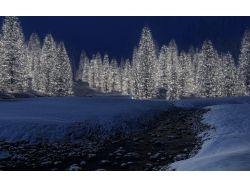 Картинки зима новый год елки 7
