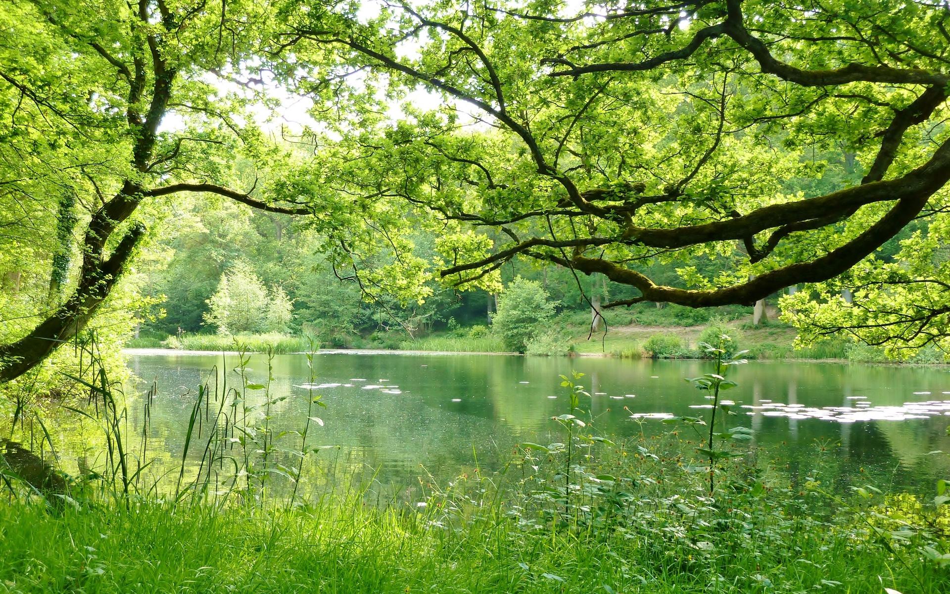 Обои на рабочий стол 1366х768 природа и лес весна