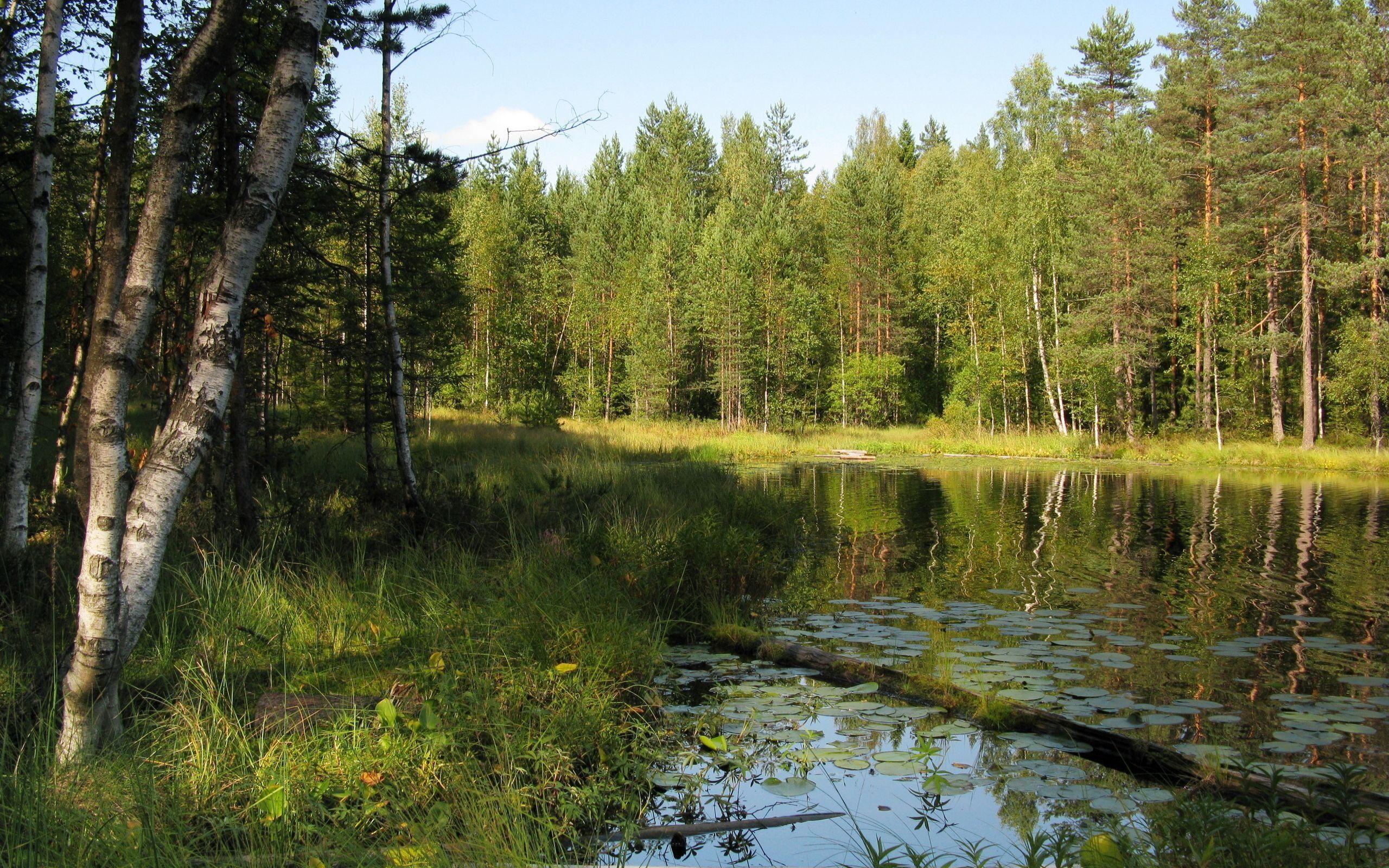 озеро деревья зелень лес лето  № 3246429 без смс